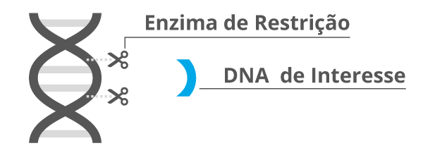 fragmento de DNA de interesse